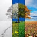 Musim Dingin, Musim Gugur, Musim Panas, dan Musim Semi