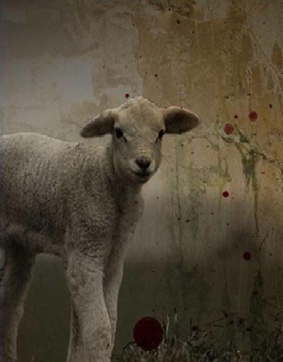 Mengapa Harus Domba yang Tak Bercela?